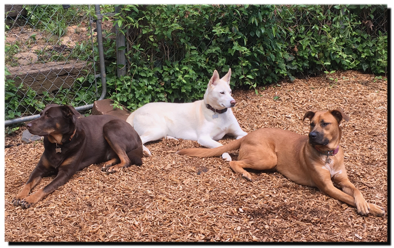 Hank, Dezra and Joanie, relaxing in the backyard